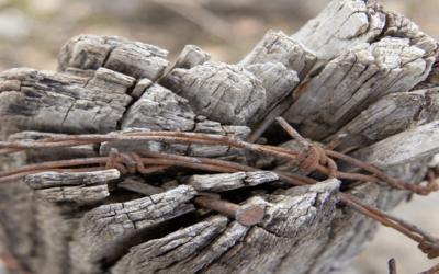 Le réseau d'Eglises, une protection contre les dérives ?